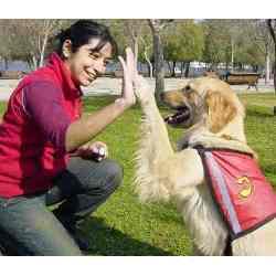 Entrenamiento de Perro un negocio para los amantes de los canes