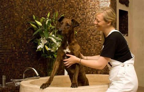 Innovadora y Lucrativa Idea de Negocio. Abrir Negocio de Spa Para Mascotas