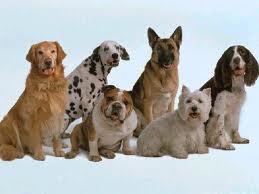 Criar Perros Idea De Negocio Para Emprender Desde El Hogar