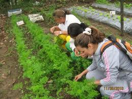 El Negocio de la Horticultura. Comienza Tu Negocio en tu propio huerto